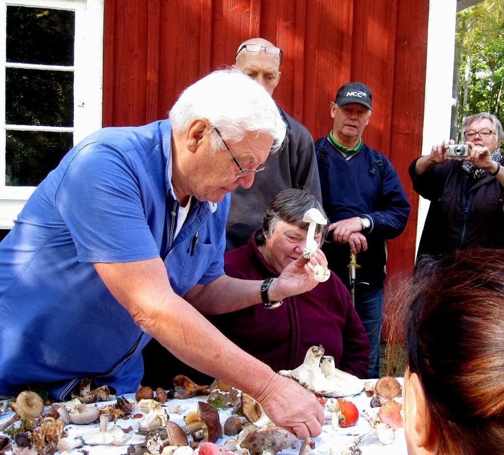 32 IMG_2461 Pedagogisk genomgång av svamp vid Lundsbo boks