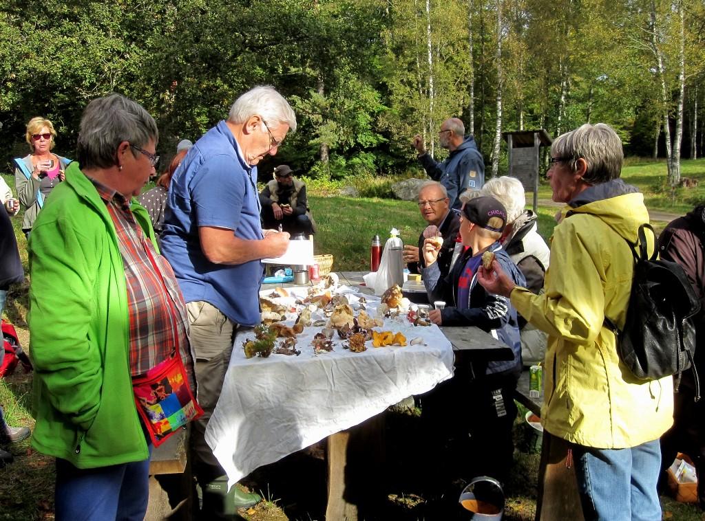 9 IMG_2431 Pedagogisk genomgång av svamp i Lundsbo boksko