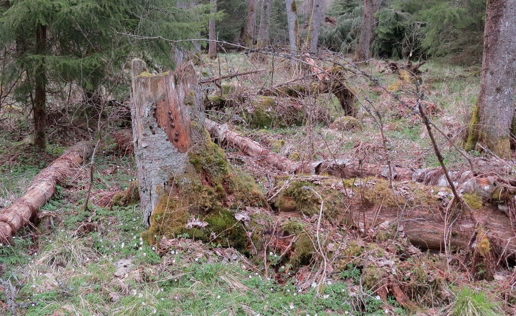 10 IMG_7003 Sotägg, Reticularia lycoperdon syn