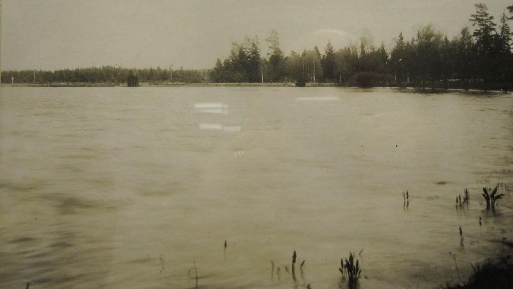 6 IMG_2697 Svalting Alisma plantago-aquatica