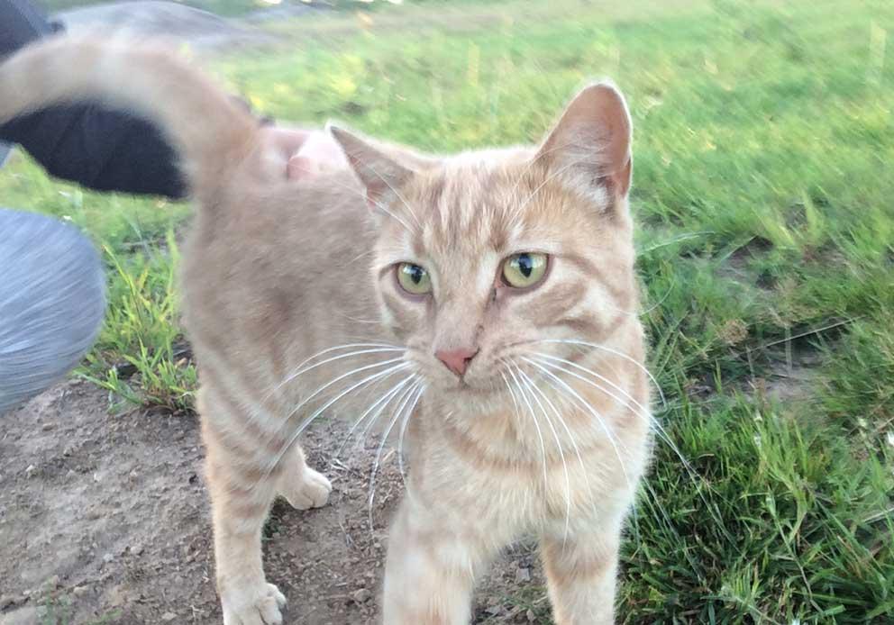 katt-160730-saknas