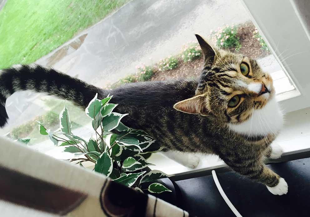 katt-forsvunnen-160802