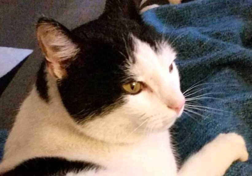 frasse-katt-160908